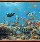 Affiches sur la faune marine des îles Marquises